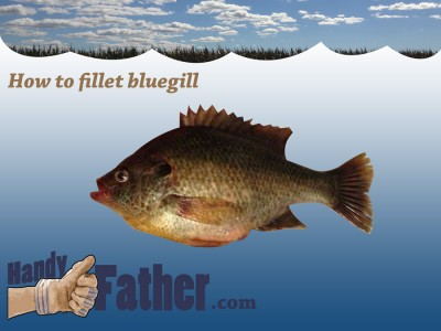 How to fillet bluegill